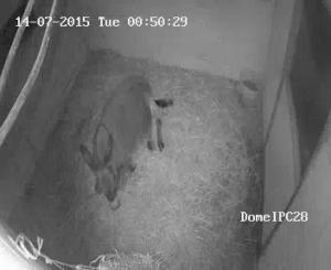 Donkey Cam CCTV