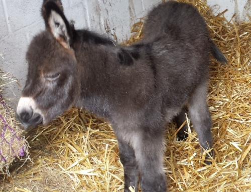 Donkey Birth Caught on CCTV