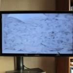 Bird Box CCTV